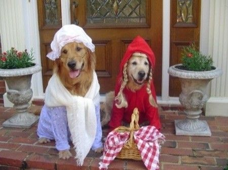 Grandma Dog And Red Riding Hood Dog Costume Pet Halloween
