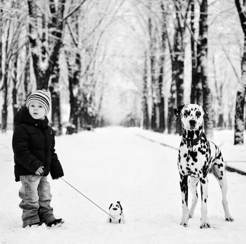 Adorable Photo By Evgeniya Semenova With Images Dogs Winter