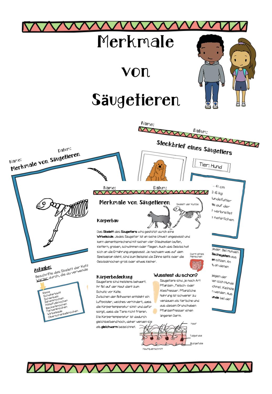 Materialspäti   Merkmale von Säugetieren – Unterrichtsmaterial in ...