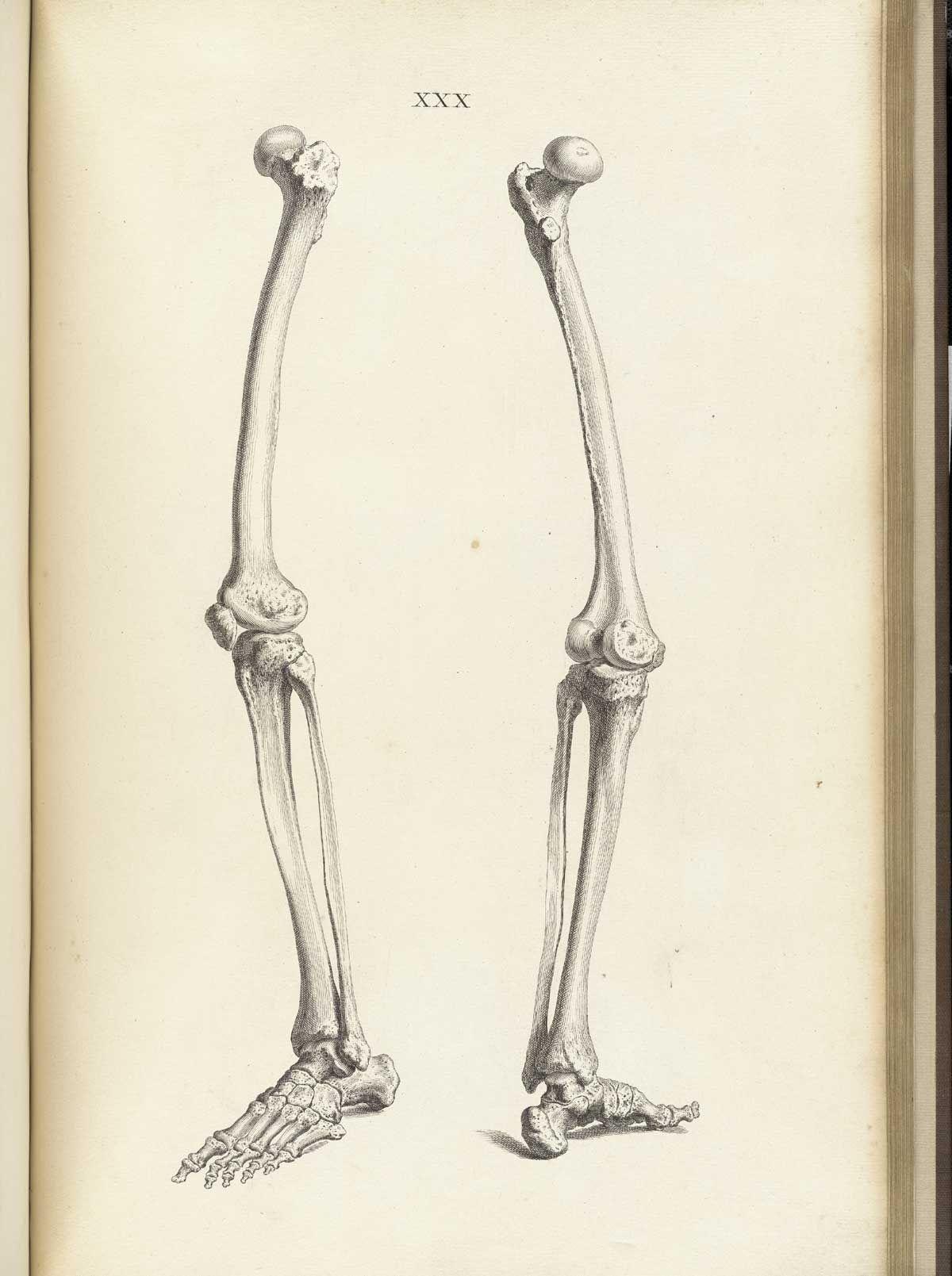 Pin de Dani Marie en Aesthetics | Pinterest | Anatomía