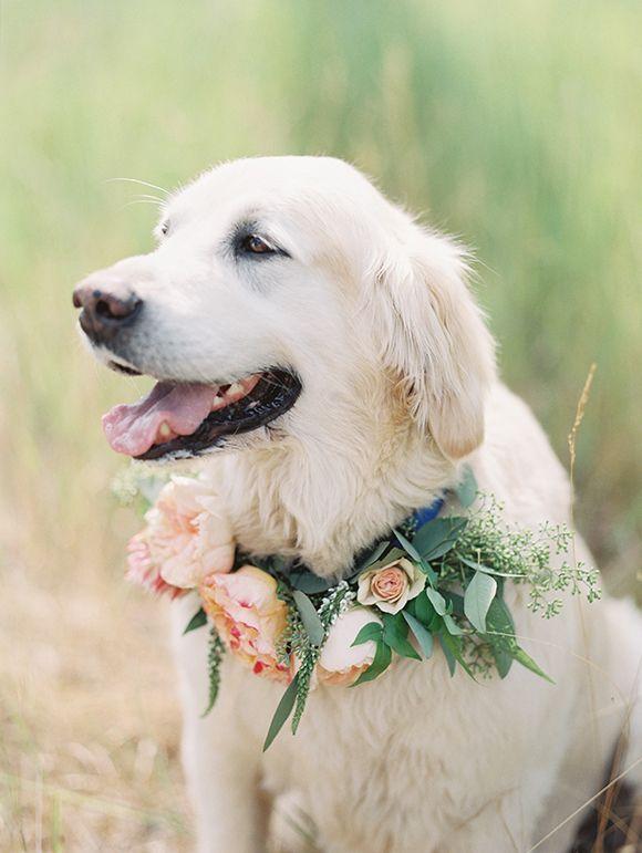 Tierische Hochzeitsgaste Hund Mit Blumen Blumenkranz Haustier