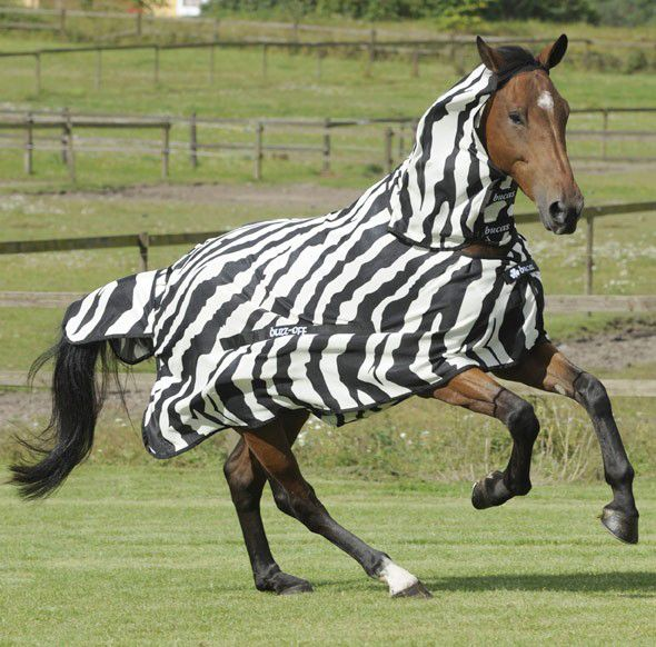 Bucas Buzz Off Full Neck Zebra Fly Rug Print With Combo Dress Our Horses Up Like Zebras This Summer And Keep Them