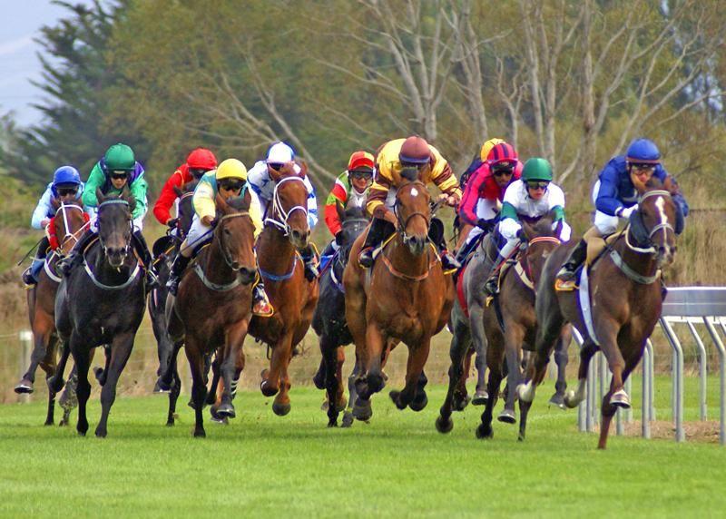 Horse racing North Otago New Zealand Pixdaus Horses