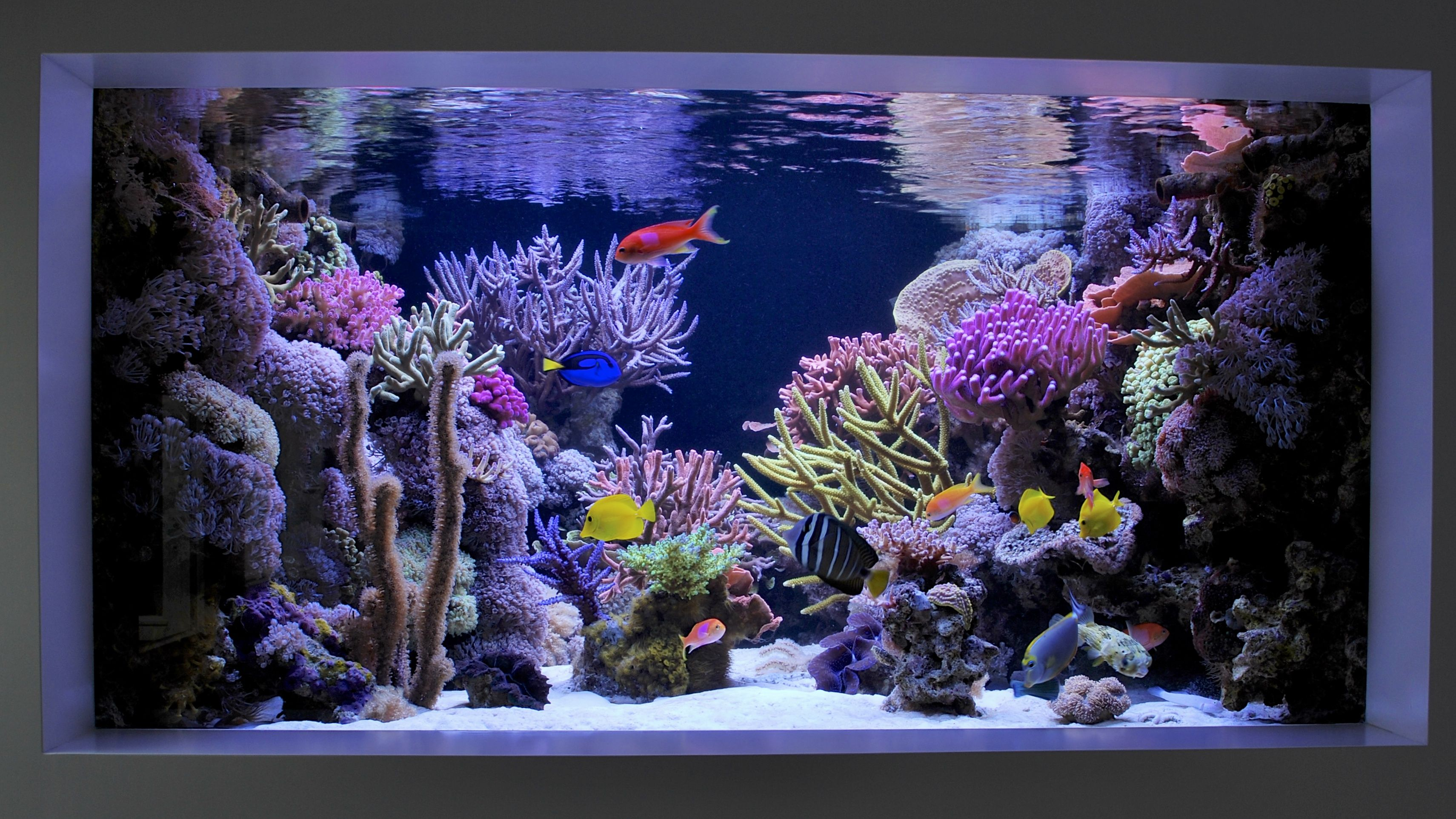In wall 500 gallon reef tank    Custom reef tanks by Aqua Luxury   Pinterest   Aquariums, Marine