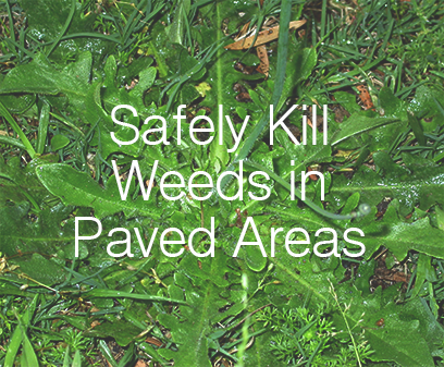 Having weeds pop up in the cracks of your paving is not only ugly but can become an