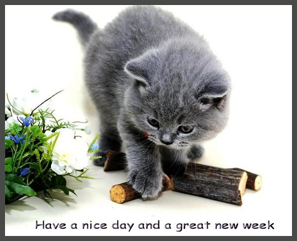 """Résultat de recherche d'images pour """"nice new week"""""""