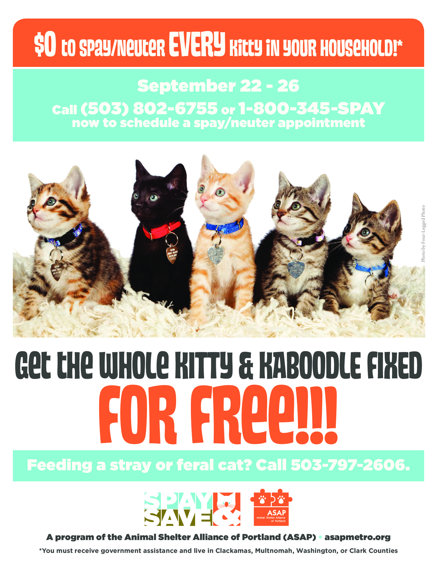 It S That Time Get Your Cats Kittens Fixed For Free During Portland S Kitty Kaboodle Special At Six Area Shelters See Fl Animal Shelter Cat Call Feral Cats
