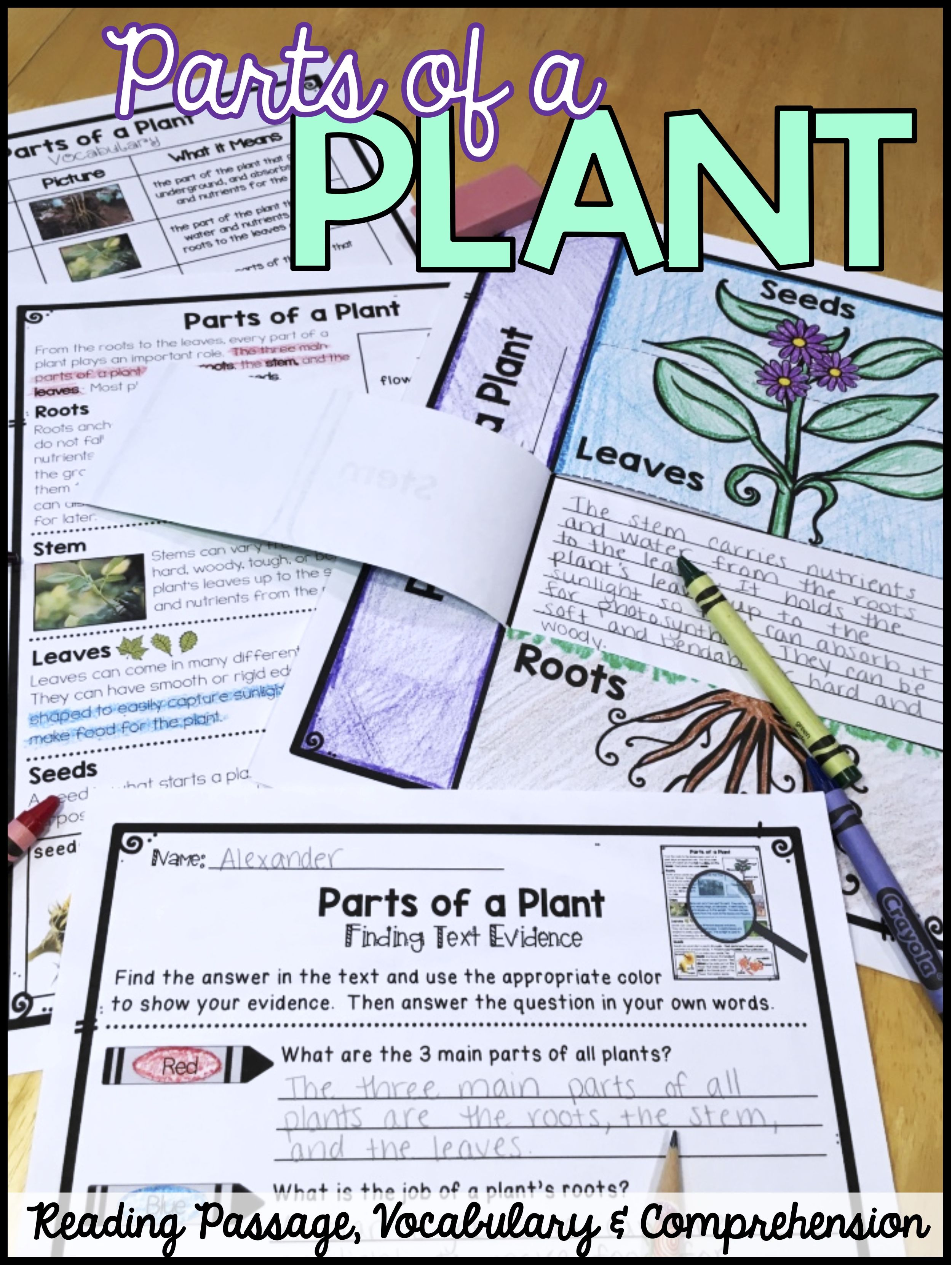 Differentiated Parts Of A Plant Reading Passage With