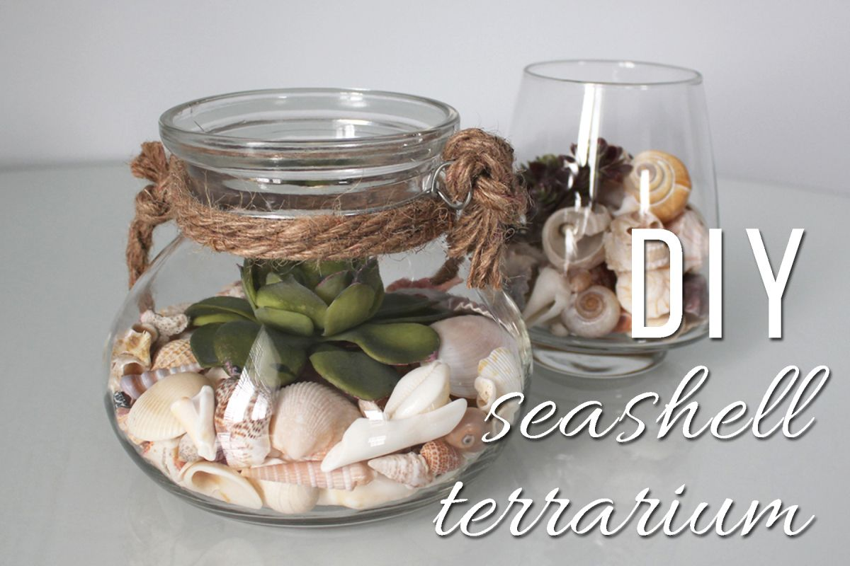 A cute terrariumstyle display for your seashells gifts