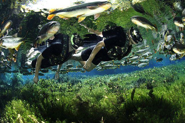 Aquário Natural