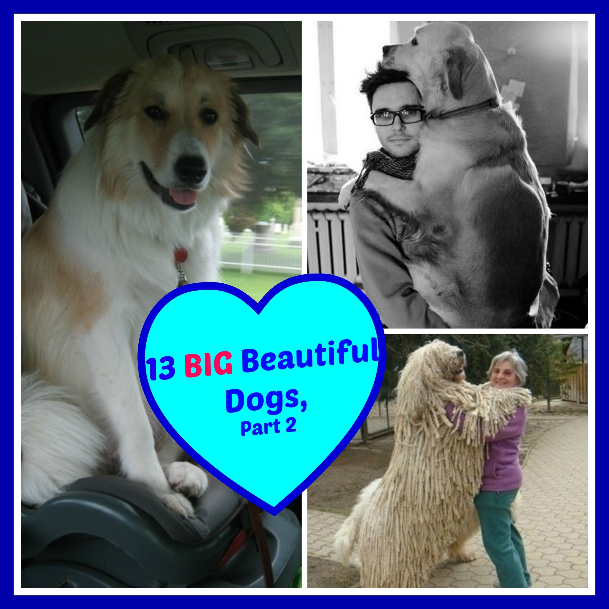 Check out all 13 photos of adorable over-sized pooches. Bet they'll make you pine, just a little, for a big beautiful dog!