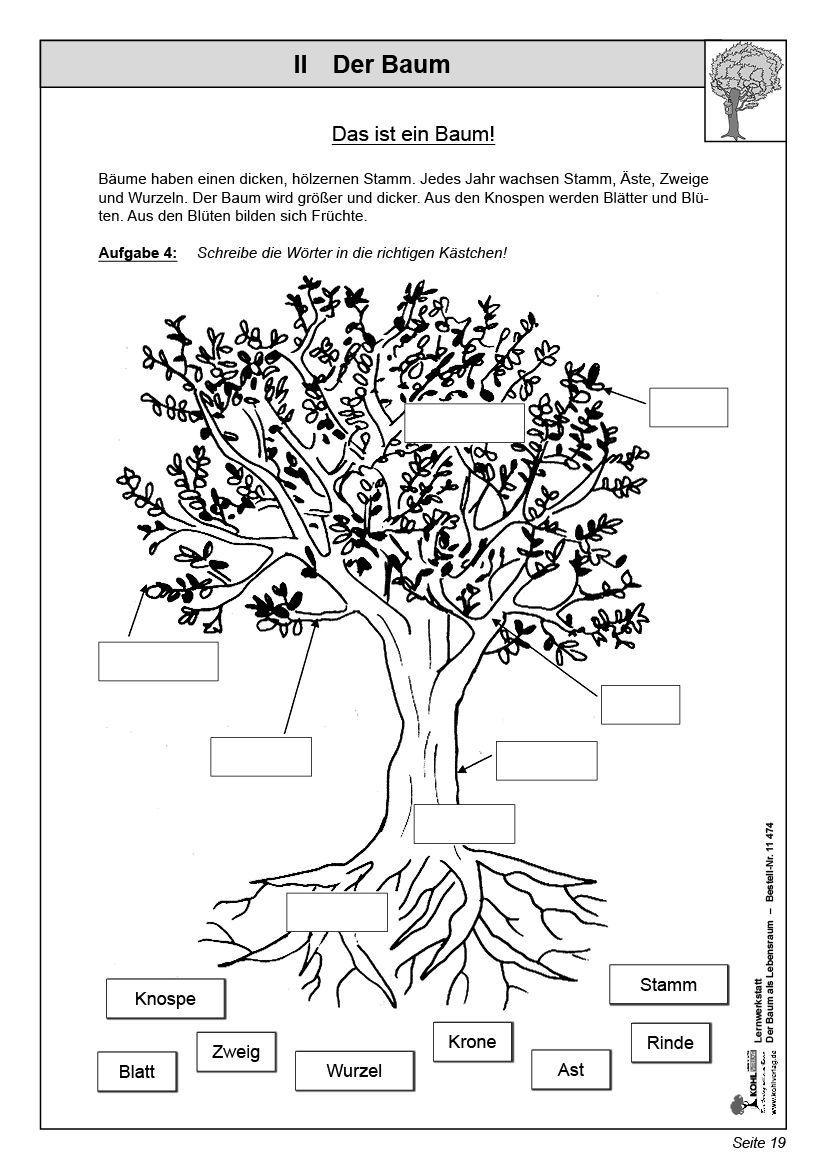 kohl verlag lernwerkstatt der baum als lebensraum biologie pinterest school and kindergarten. Black Bedroom Furniture Sets. Home Design Ideas