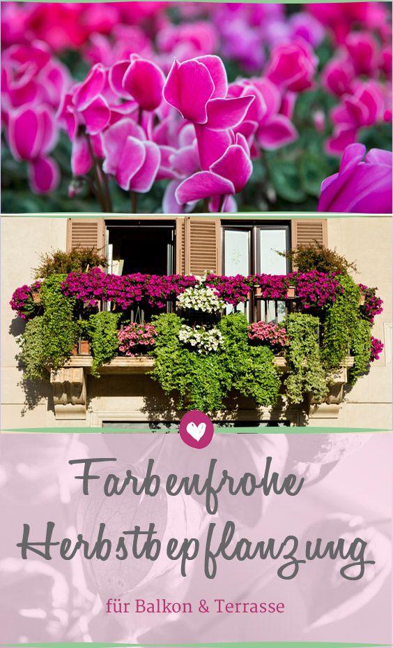 Später Farbenzauber für Balkon  Terrasse Garten and Flowers
