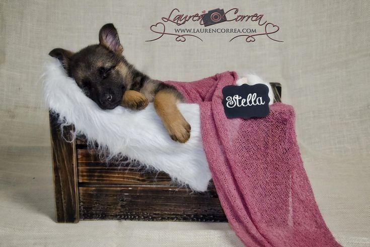 Pin by dog_is_life on German Shepherd German shepherd