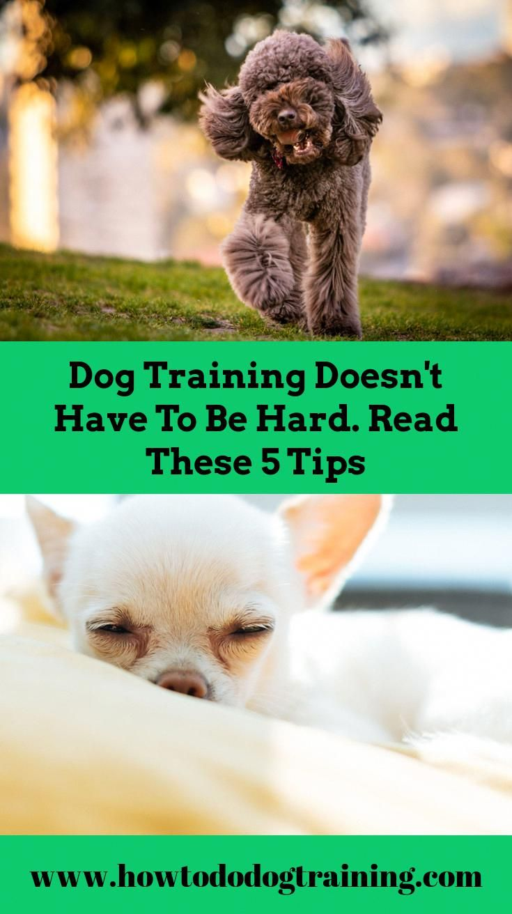 Required Aid With Pet Training Think About These Tips When