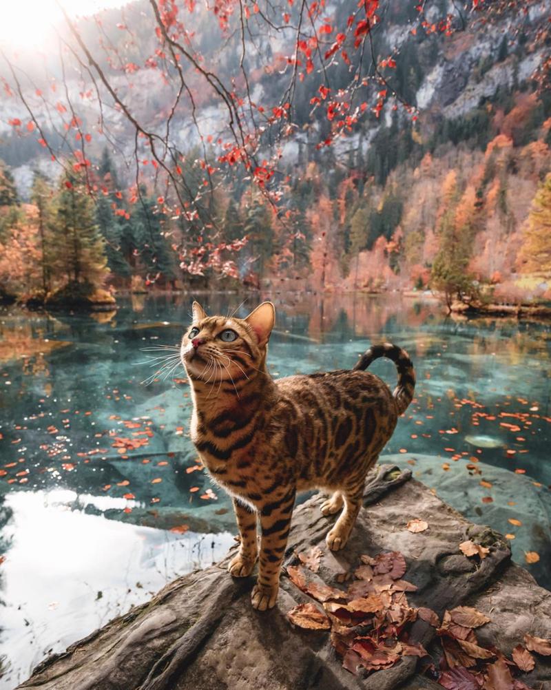 Photo of Suki Cat Living Her Best Life