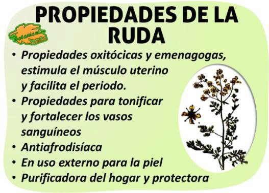 Propiedades medicinales de la planta ruda y remedios for Planta decorativa con propiedades medicinales