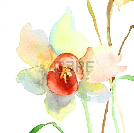 narcissus watercolor - Google Search