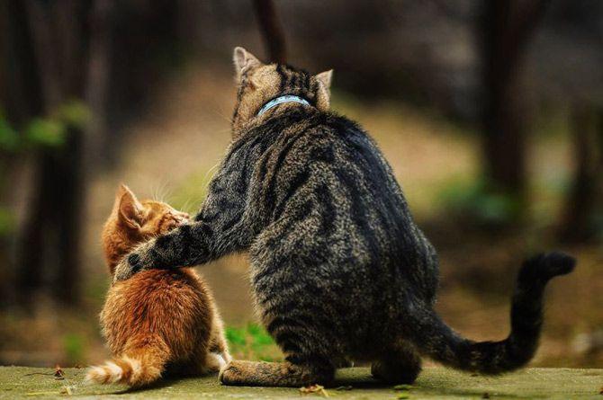 carinho entre animais - Pesquisa Google