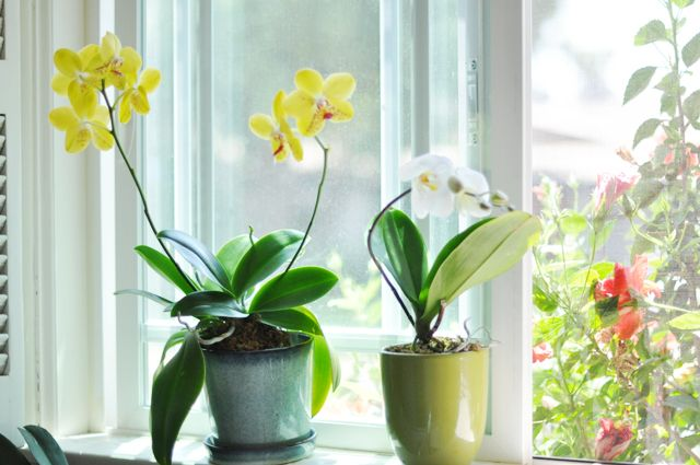 Meagan S Tips On Re Growing Orchids Totally Work I Just Regrew