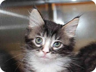 Contact This Shelter Shelter Palm Springs Animal Shelter Pet Id 5683432 A028107 Phone 760 416 5718 Let Em Know Pets Kitten Adoption Animals