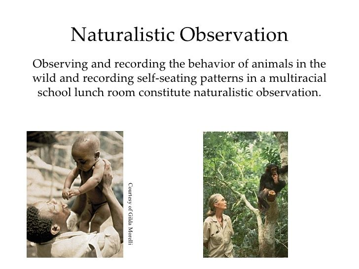 Naturalistic Observation | Encyclopedia of Psychology