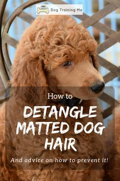 How To Detangle Matted Dog Hair In 2020 Matted Dog Hair Dog Haircuts Labradoodle Grooming