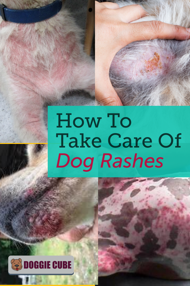 How To Take Care Of Dog Rashes Doggie Cube Dog Rash Rash On Dogs Belly Dog Dry Skin
