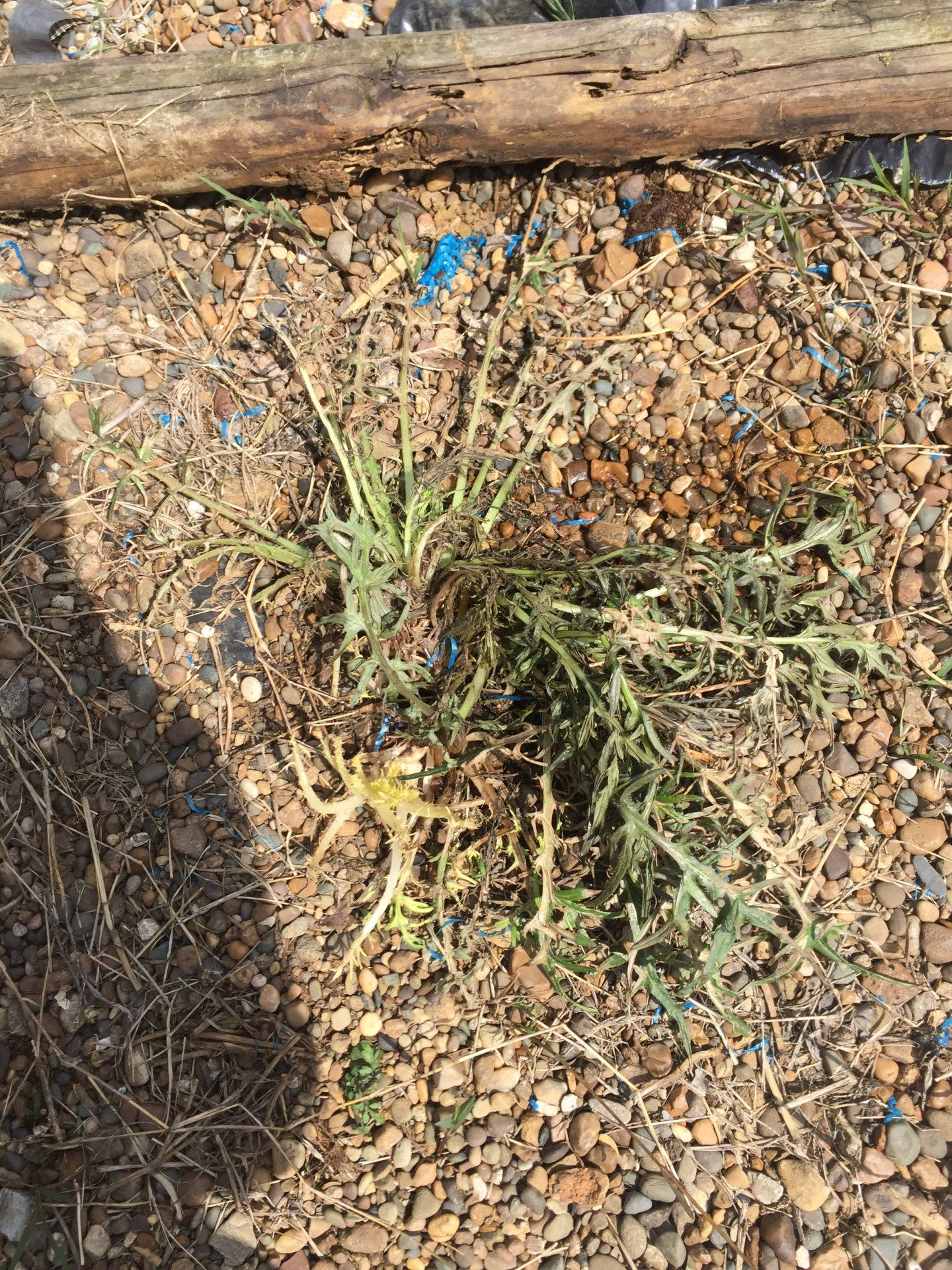 Better Than RoundUp Weed Killer For A Fraction Of The Cost | Weed ...