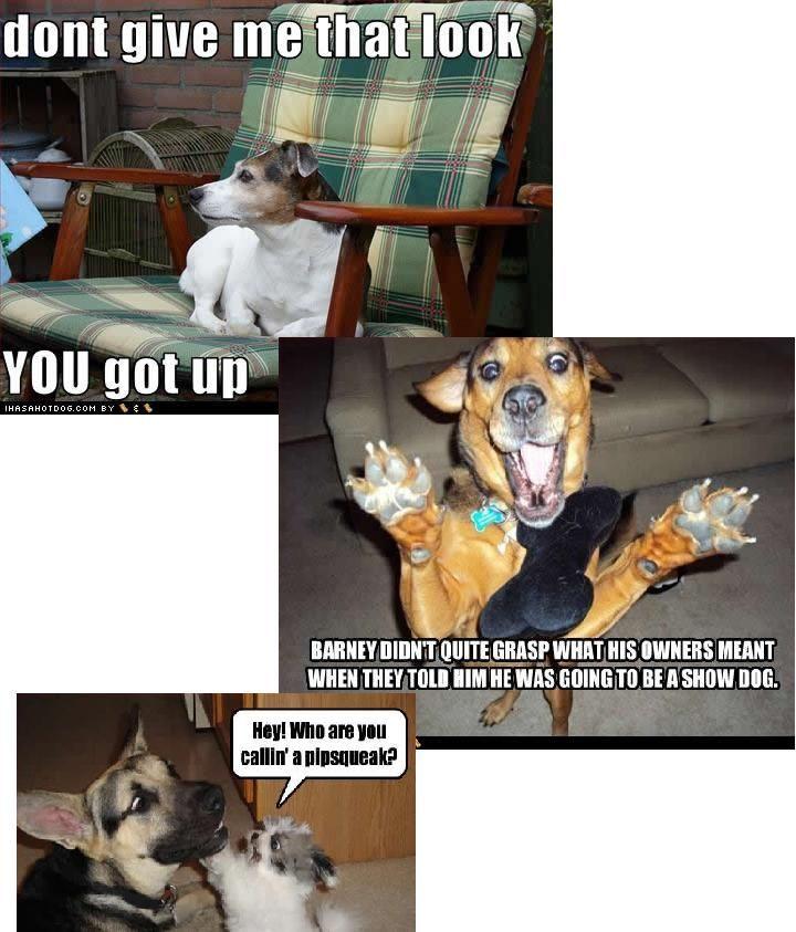 funnies | Dog Funnies 2 (thanks Carol) | Kathleen Heck's Joke Blog