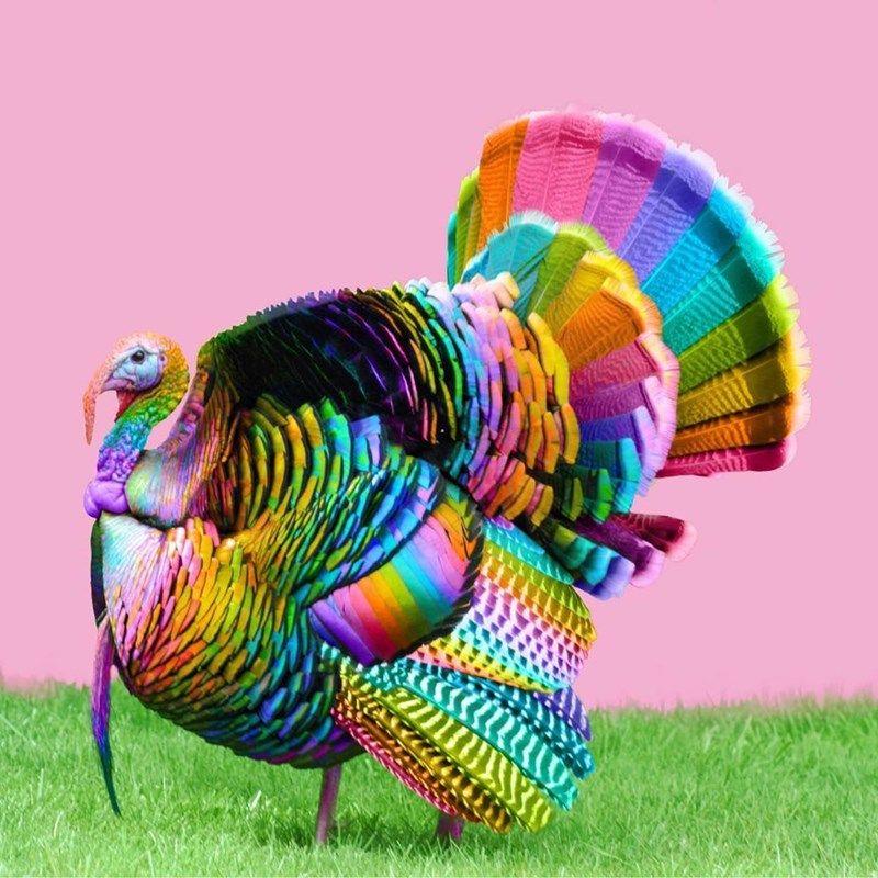 36+ Rainbow turkey ideas