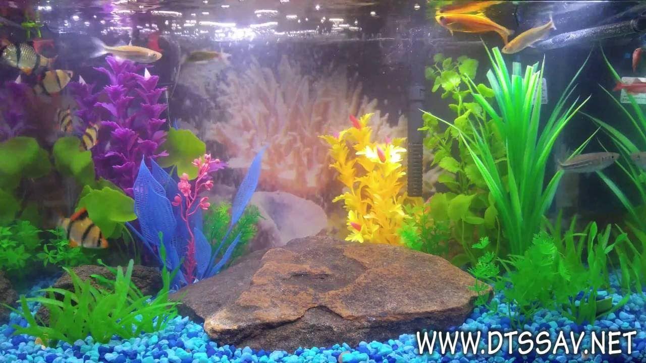 UHD 4K Color Changing Bluetooth LED Fish Tank - DTS Savannah | Fish ...
