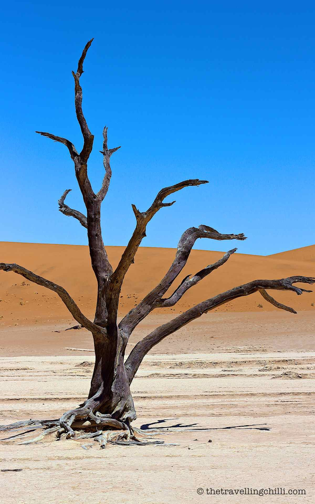 Top 10 Highlights of Southern Namibia