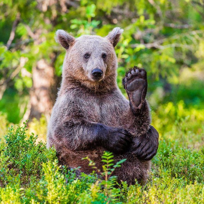 Картинки смешные медведей, подкова счастье