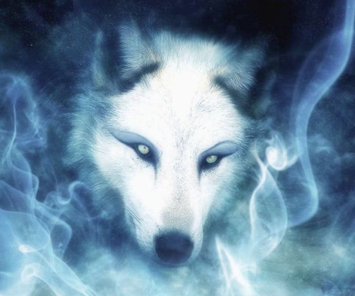 Image result for white wolf blue eyes anime