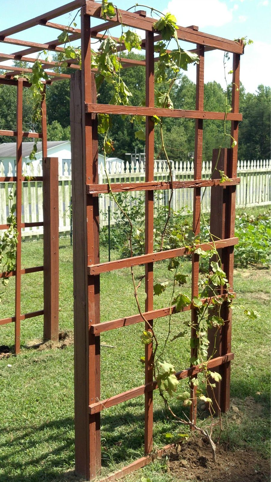 Easy Garden Trellis Ideas Part - 18: Garden Fence/Grapevine Trellis