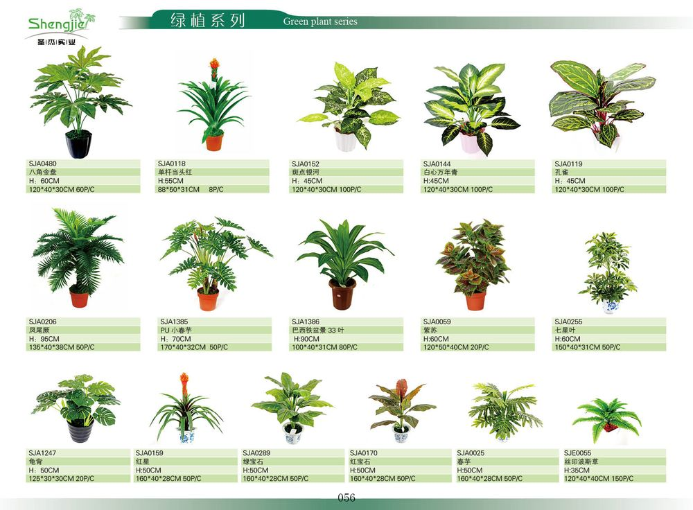 Indoor Home Decoration Mini Palm Trees Plant For Sale - Buy Mini ...