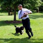 barack Obama Bo Portugese water Dog