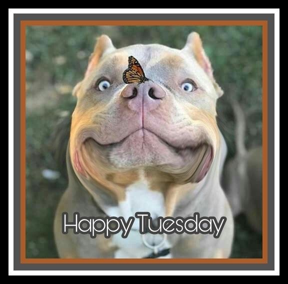 Happy Tuesday | Tuesday quotes, Tuesday quotes good ...