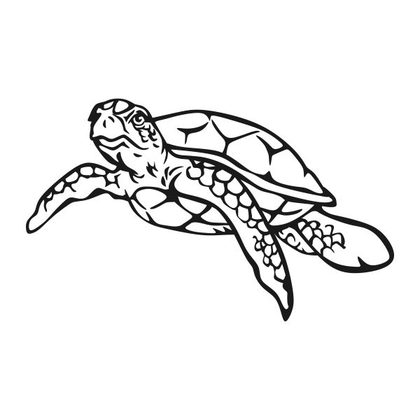 Sea Turtle Cuttable Design Turtle Silhouette Turtle Outline Turtle Drawing