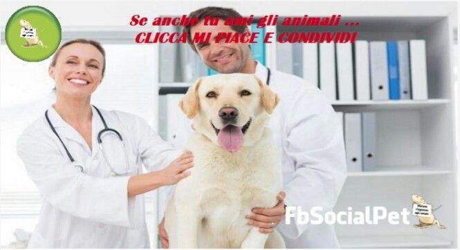 Tumore della prostata: i cani sanno fiutarlo con precisione