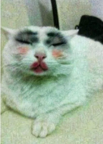 when i was 5 i did this to my grandmas cat. and it rubbed off all over the white carpet. uh yeah..... - @Christina Ba{llerina} <3