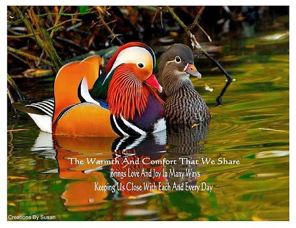 Comfort By Susan Ince In 2021 Animals Animals Beautiful Beautiful Birds