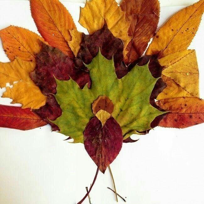 фото гербария из осенних листьев укладывают один ряд