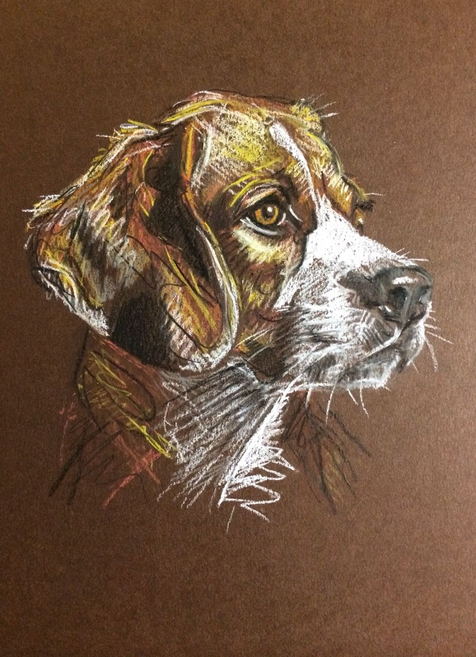 Day 34 Pastel on card by Lucy Wilson, New Zealand. www