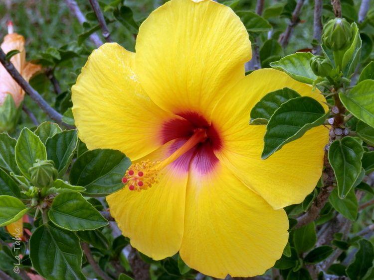 15+ Rosa china amarilla inspirations
