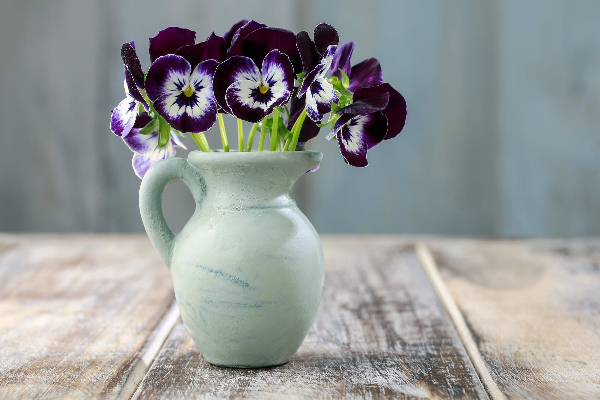 Stay in season the most beautiful winter flowers for your home stay in season the most beautiful winter flowers for your home izmirmasajfo