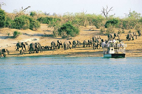 Chobe Game Reserve Botswana Was There For Work But Managed To - Chobe river