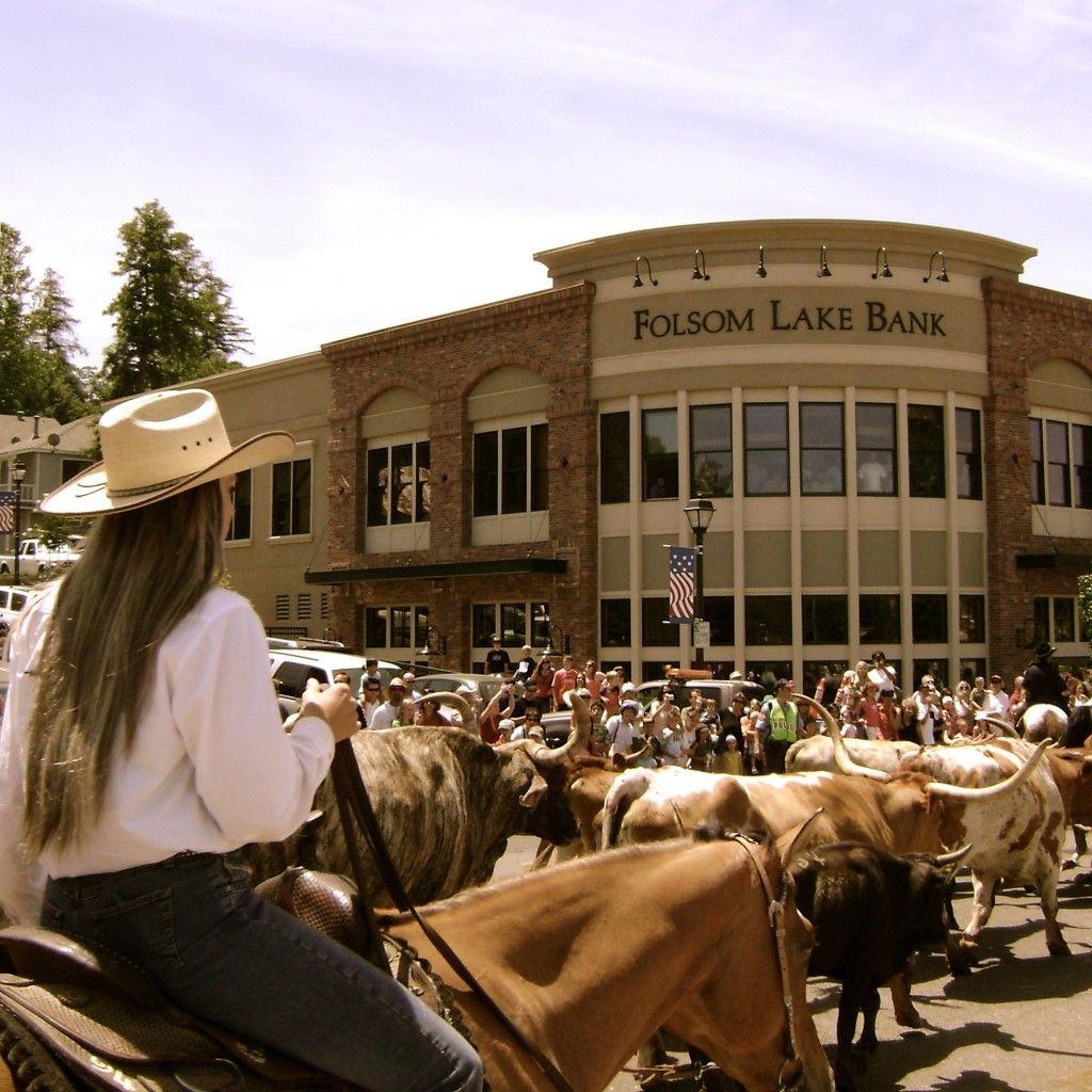 Cattle Drive right down Sutter Street in Folsom! Folsom