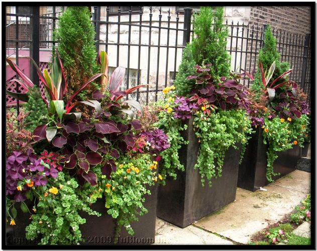 Commercial Planters For Trees Tu Bloom Garden Landscape Design Services Residential Commercial Potted Plants Outdoor Summer Planter Garden Containers